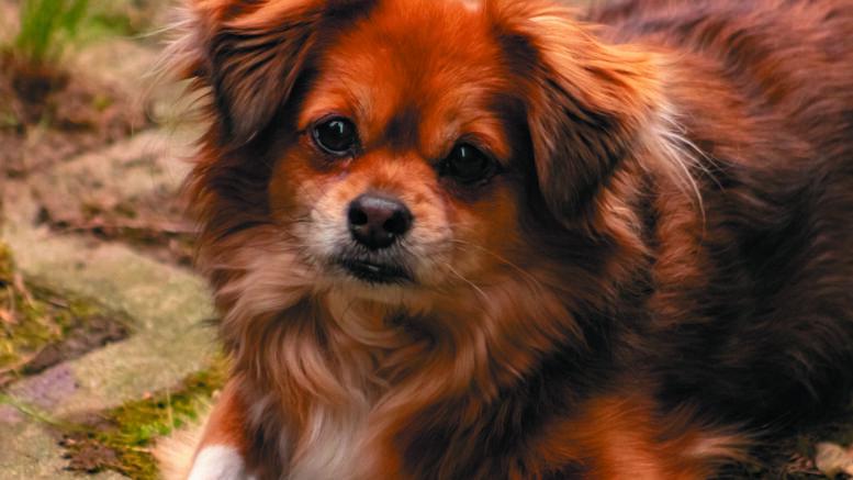 Cuántos años vive un perro