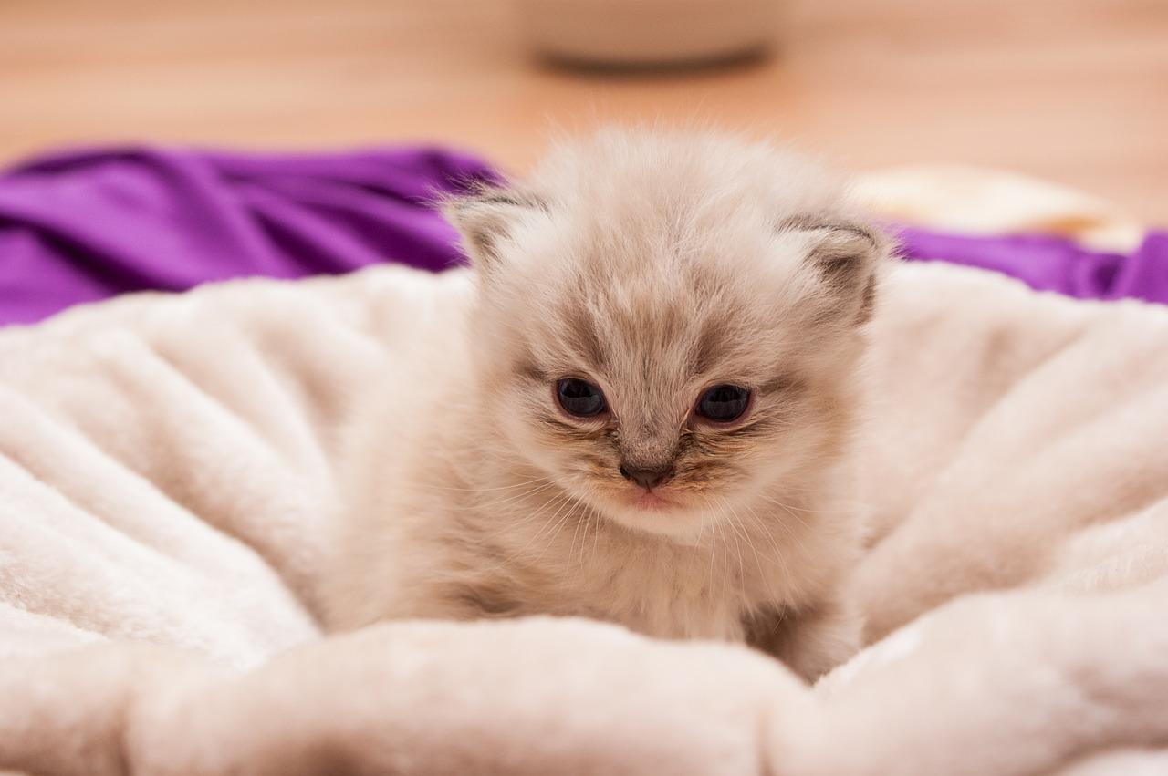 Gato bebé