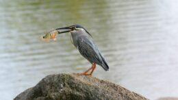 Qué comen las aves